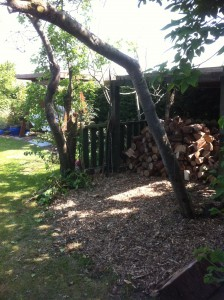 Tree House to Log Store